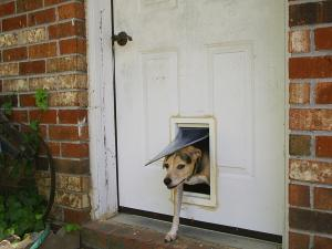 doggy doors